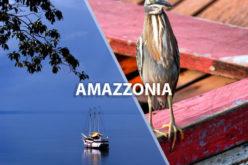 Navigare nella foresta Amazzonica e viaggiare sulle Alpi con Google Street View